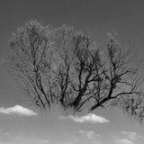 Under The Tree (IdmChillTrip)