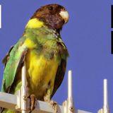 Transmission#27 by Paolino Zlaia & La Marzia Rimini web Radio