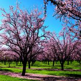 """""""The Spring Landscapes'' Mix (March 2012 Mix) By Dimi Von"""