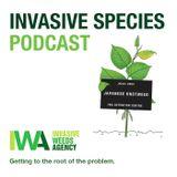 Episode 1- Invasive Species- Japanese Knotweed