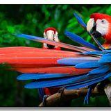 Estereo 11.2.2015 - brazilian rare groove, samba, bossa, batucada and birds from Amazonia