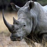 TRAVISWILD's Animal Kingdom Radio 045 - Rhino