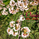 Oasis@Bar Music 2017.4.5 (20:00 to 21:30) - Shades of Spring