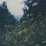 Nashville Mixtapes on WXNA - 8.12.17 (Music Only)