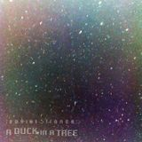 A Duck in a Tree 2014-11-15 | High Faults
