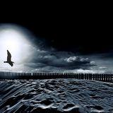 Dena Martínez.- Seagull-(original mix)