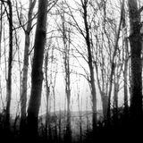 núvol de fum 207 | la seda de la vida