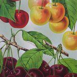 Pop kujna #16 - Rajsko voće
