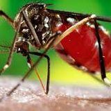 Hablemos de Salud - Dengue