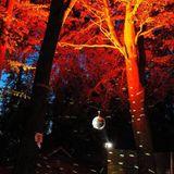 Autumn Affair 4 (Disco Gold, mixed by Janek Kost®zewa)