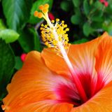 Malibu Suave 002- Tropical Mix