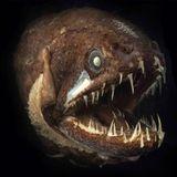 "Piranha Synapses ""sind Kaput"" (Tostas Mashup) - Wolfgang Gartner vs. Auvic vs. Justice"