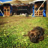 kidProquo - Secret Farm Reggae Dub Set 2016