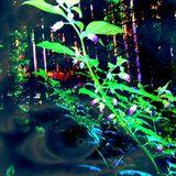 CrystalClear (Shroombot Promomix / Psygressive Mix)