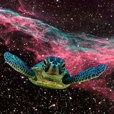 Ambient turtle in space