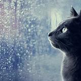 [BLOG RADIO SỐ 4] : Ngày mưa