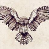 OWI - J'suis un oiseau (Live Set)