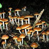 I wish - Infected Mushroom (Skazi rmx)