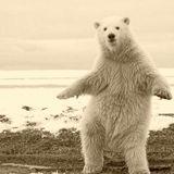 Canada /  The Bear