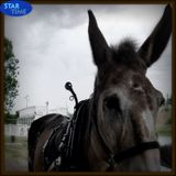 Star Time #44: Another Mule is Kicking in Your Stall