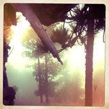 Jazza - I boschi di gennaio