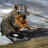 Snowphish - Easter Squirrels' Mix
