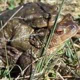 Fous de Nature #03 - Batraciens & Amphibiens