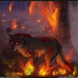 BASS Wolf