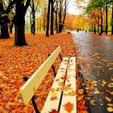 Golden Autumn