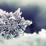 WHITE SNOW FLOWER - NS PROJECT ft BM TRANCE LOVE MIX