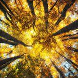 Ruslan Kuleshov - Autumn Mix