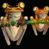 Frog Trance