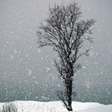 Advice is like snow - the softer it falls and the deeper in sinks into the mind.