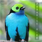 Paradise Bird (Sm133) 119-124bpm