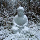 Buddha's Winter