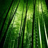 Chill Mode Of The Forest(Underwater Gravity Mix)