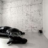 The Horse - Audio work for exhibition The Chain by Simonida Rajčević