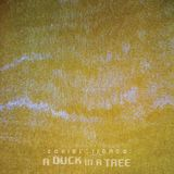 A Duck in a Tree 2014-12-20 | The Algorithm of Sleep