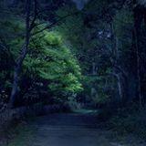 Dark Path vol.2