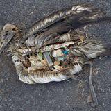 Cocalar Cosmos - Fear this: Albatros is finally summoned
