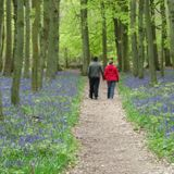 How blue is your belle?  A homage to Dockey Woods and scented flowers with Sarah Lowther (23/4/2017)