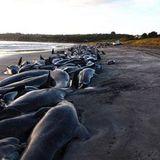 """A gdje su kitovi - """"Zašto se kitovi nasukavaju?"""" - 19.11.2014."""