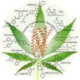 Bioxtractos Online: T2 EP3 - CANNABIS MEDICINAL
