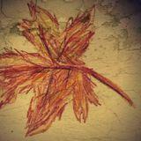 Herbstregen - MOBIAS [MIX Oktober]