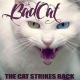 Fresh outta WMC - The Cat Strikes Back!
