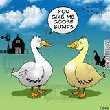 Peter dB - Goose Bumps