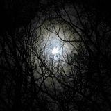 Darkness (Live 24.10.14 [Minimal/Tech/Prog/Deep/Tribal]