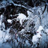 Deep Winter Podcast Part 2
