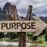 The Purpose Driven Pilgrim (Part 2) What's the point if there's no point?