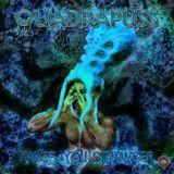 Quadrapuss Live Forest Mix